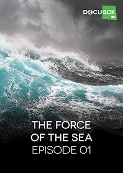 The Force Of Sea